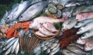 Польза и вред рыбы. Каких сортов рыбы нужно избегать