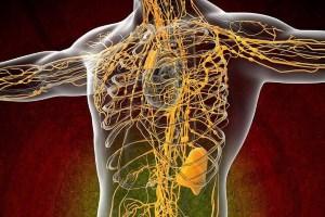 Лимфатический и венозный кровоток дополняют друг друга