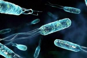 Глотание антибиотиков стало национальным видом спорта. Термометр показывает 37,3, сразу человек бросает в рот антибиотик.